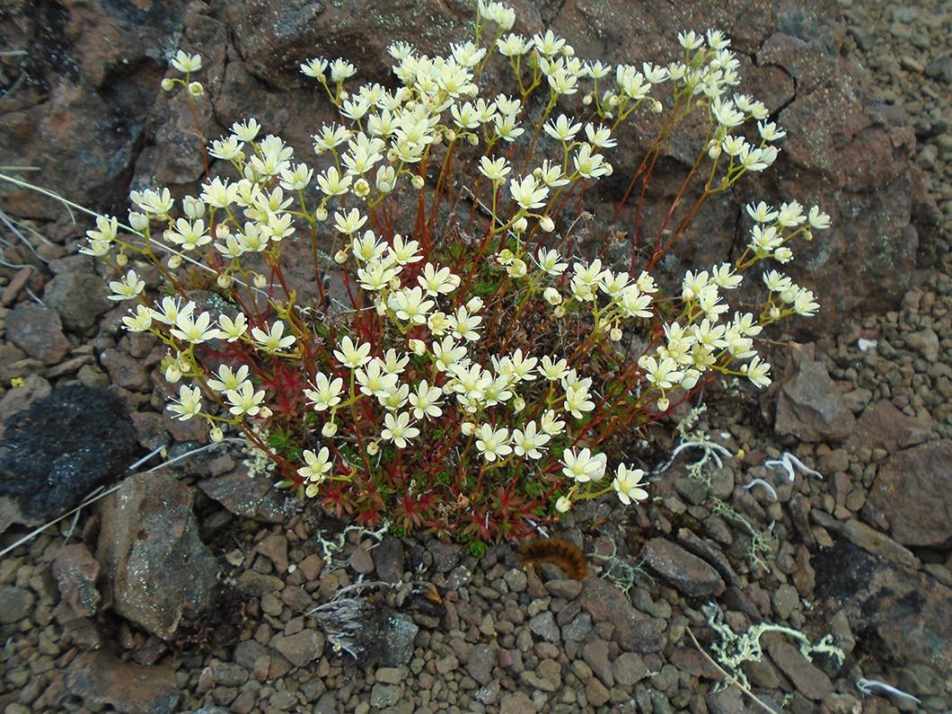Уникальные исследования на плато Путорана проводят норильские биологи