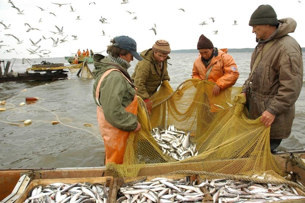 Ихтиологические исследования и рыбоводное хозяйство: разработаны меры поддержки коренных народов Таймыра после аварии