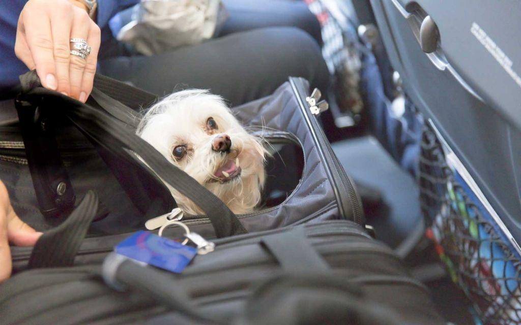 Путешествие с животным станет комфортнее