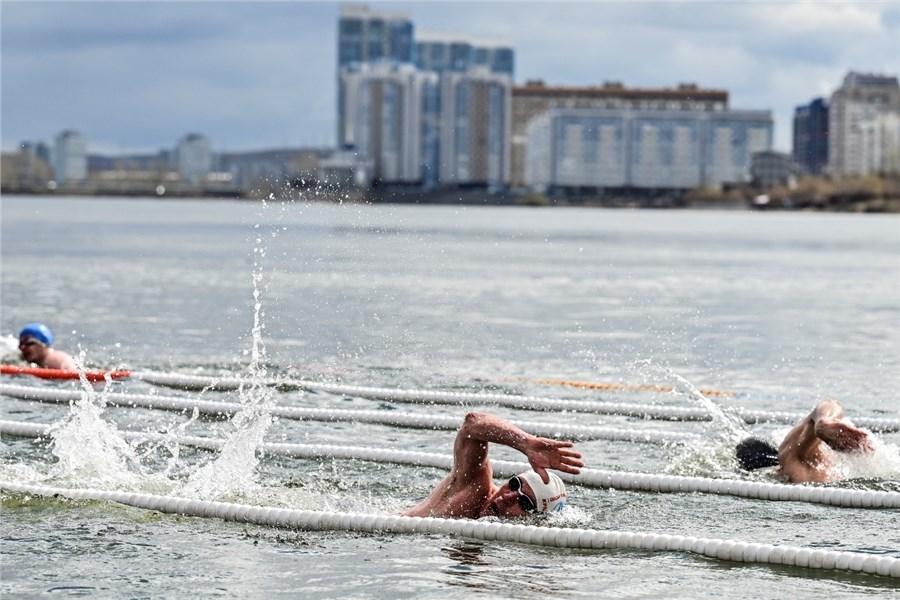 Сибирские моржи проплыли ледяную «милю Победы» по Енисею