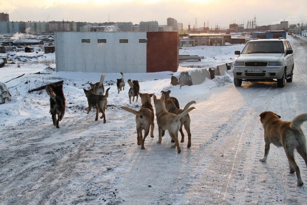 На комиссии по городскому хозяйству заложили бюджет на отлов бездомных животных в 2021 году
