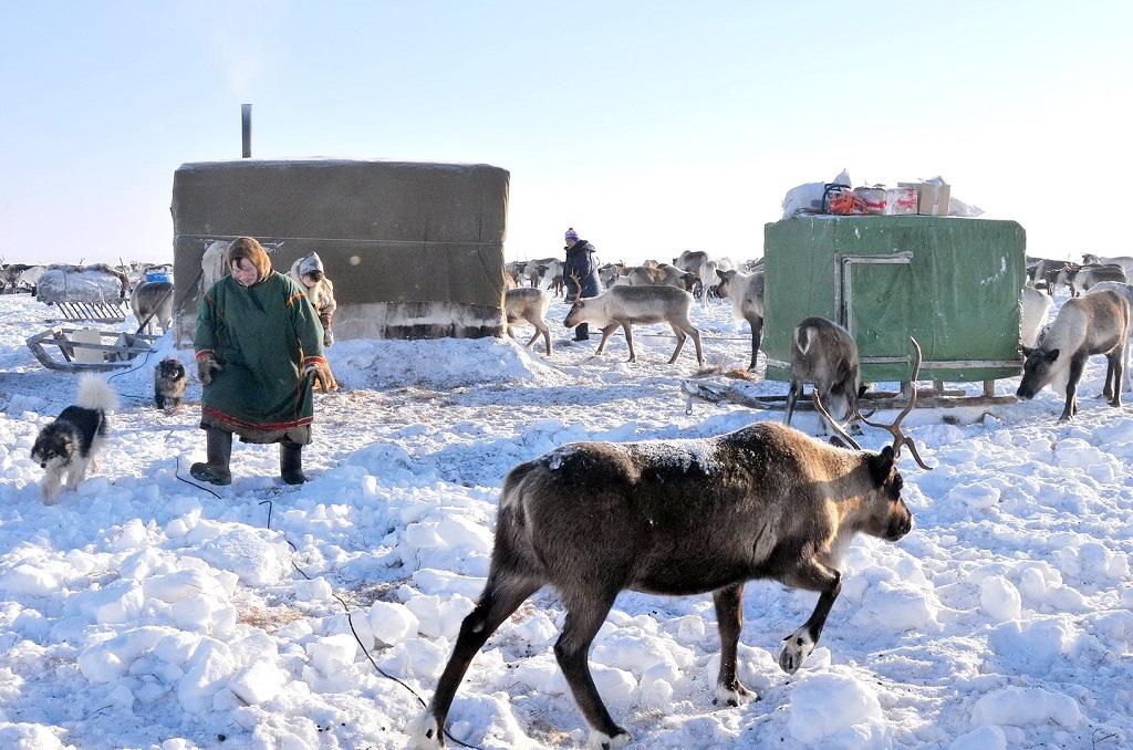 Михаил Мишустин утвердил программу государственной поддержки традиционной хозяйственной деятельности коренных народов