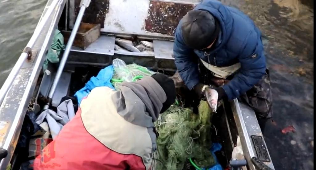 Рыбаки отделались штрафом за незаконный вылов омуля