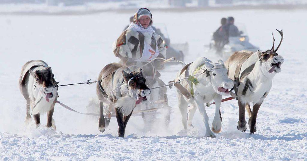 На поддержку коренных малочисленных народов Таймыра в 2017 году из бюджета Красноярского края выделено более 280 миллионов рублей.