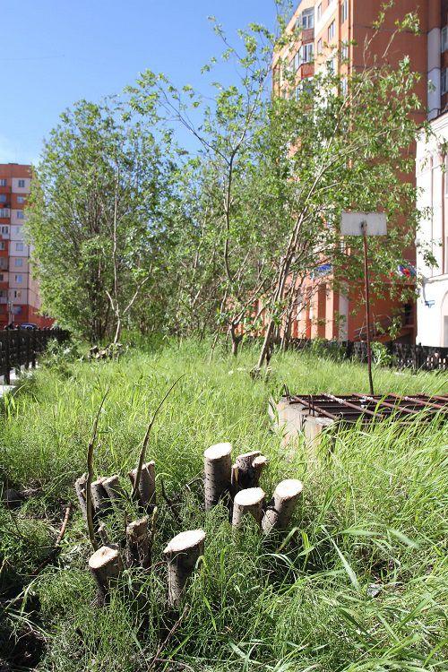 Зеленые насаждения на разделительных газонах, ограничивающие видимость на автодорогах, будут пересаживать на другие территории города.