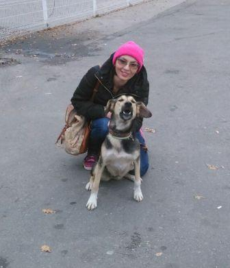 Потерявшуюся в аэропорту Домодедово собаку вернули хозяйке.