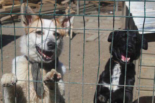 Норильскому приюту для бездомных животных срочно требуется забор!