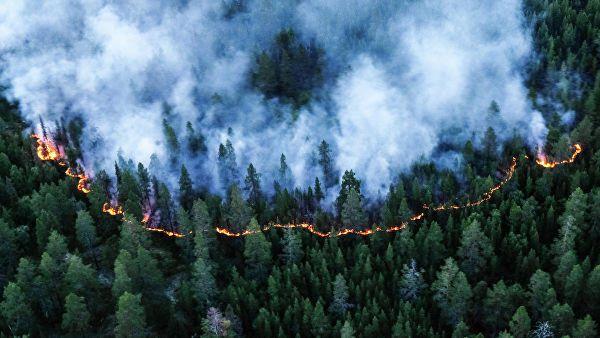 За прошедшие сутки в крае ликвидировано 34 лесных пожара.