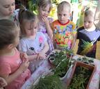 Юные огородники надеются на хороший урожай